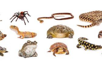 Экзотические животные, насекомые и пресмыкающиеся в доме