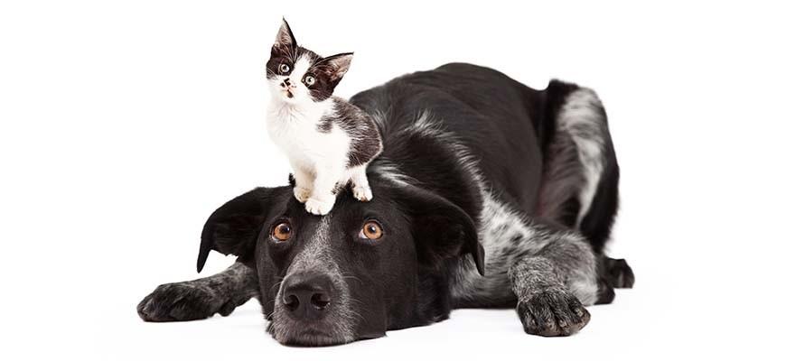 котёнок на голове собаки